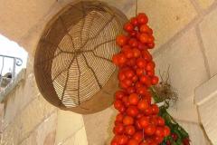 Pedula, pomodori invernali